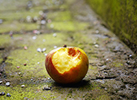 The True Cost of Food Waste